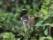 Petit singe en Amazonie bolivienne
