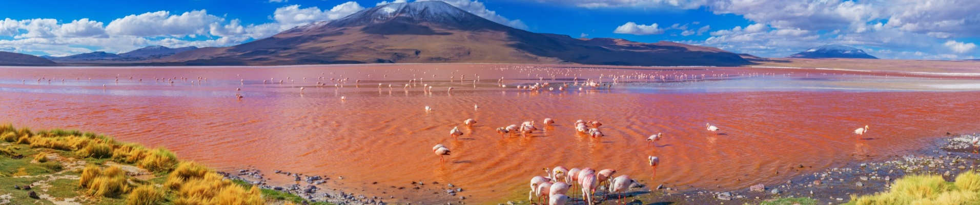 Flamants roses Laguna Colorada, Uyuni, Bolivie