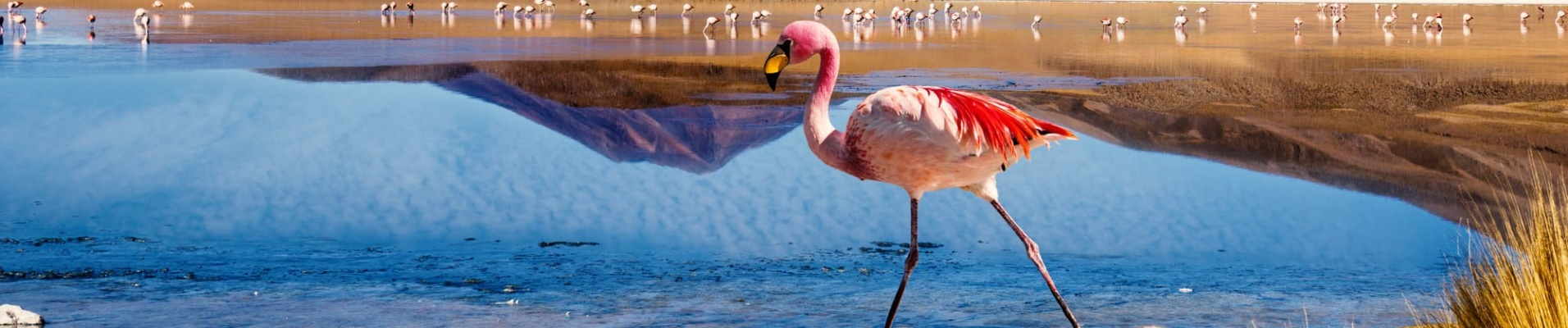 Flamant rose Sud Lipez